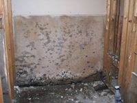 images/gallery/mold-damage/101425.1000719.jpg