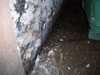 images/gallery/mold-damage/490888.1000649.jpg