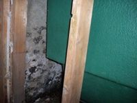 images/gallery/mold-damage/543305.1000647.jpg