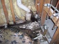 images/gallery/mold-damage/647770.1000721.jpg