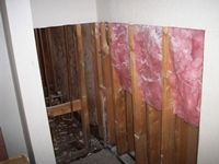 images/gallery/mold-damage/753567.1000715.jpg