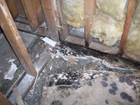 images/gallery/mold-damage/943212.1000723.jpg