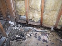 images/gallery/mold-damage/9799.1000722.jpg